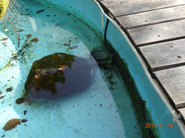 屋外テープライトを庭の池に導入